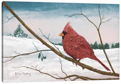 Auburn Cardinal Canvas Art Print