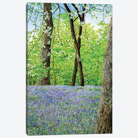 Blue Bells Canvas Print #RDD4} by James Redding Canvas Wall Art