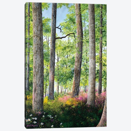 Enchanted Forest Canvas Print #RDD7} by James Redding Canvas Wall Art