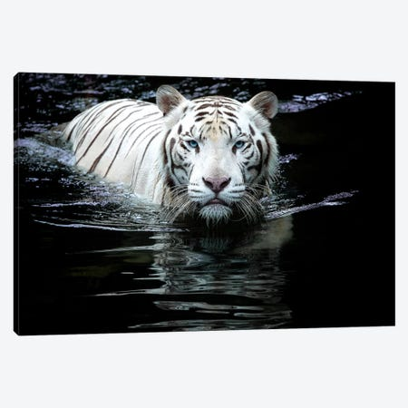 Looking at Me Looking at You Canvas Print #RDO2} by Renee Doyle Canvas Art