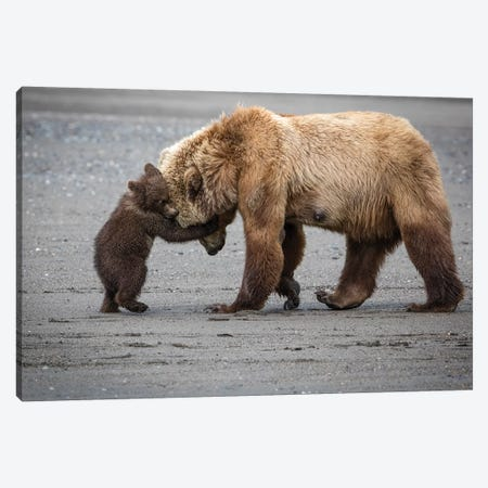 A Little Bear Hug Canvas Print #RDO4} by Renee Doyle Canvas Print