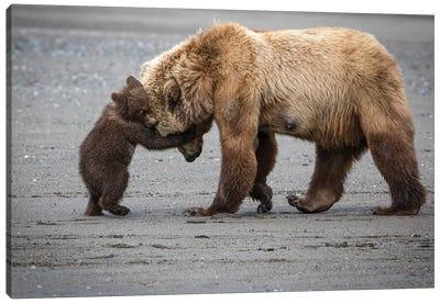 A Little Bear Hug Canvas Art Print