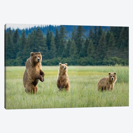 Alert Canvas Print #RDO6} by Renee Doyle Art Print