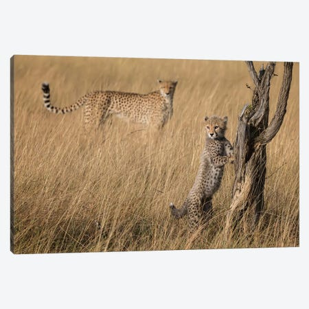 I'Ve Got It Mum Canvas Print #RDO8} by Renee Doyle Canvas Art