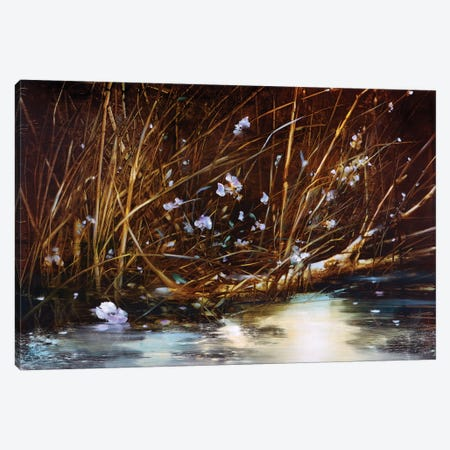 Close Up Canvas Print #RDS26} by Ron Di Scenza Canvas Art