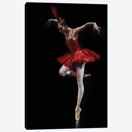 Flamingo Dancer Canvas Print #RDS36} by Ron Di Scenza Art Print