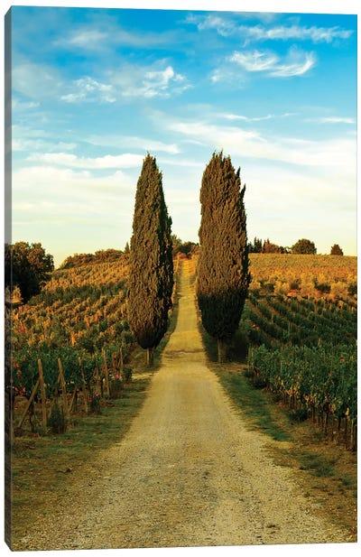 Stately Cypress Trees, Panzano In Chianti, Florence Province, Tuscany Region, Italy Canvas Art Print