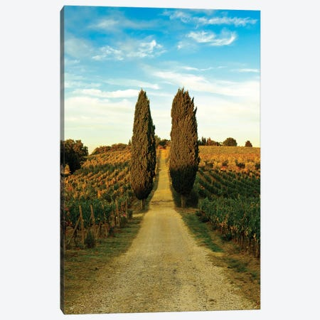 Stately Cypress Trees, Panzano In Chianti, Florence Province, Tuscany Region, Italy Canvas Print #RDU2} by Richard Duval Art Print