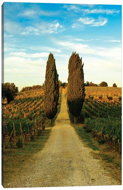Stately Cypress Trees, Panzano In Chianti, Florence Province, Tuscany Region, Italy Canvas Art Print