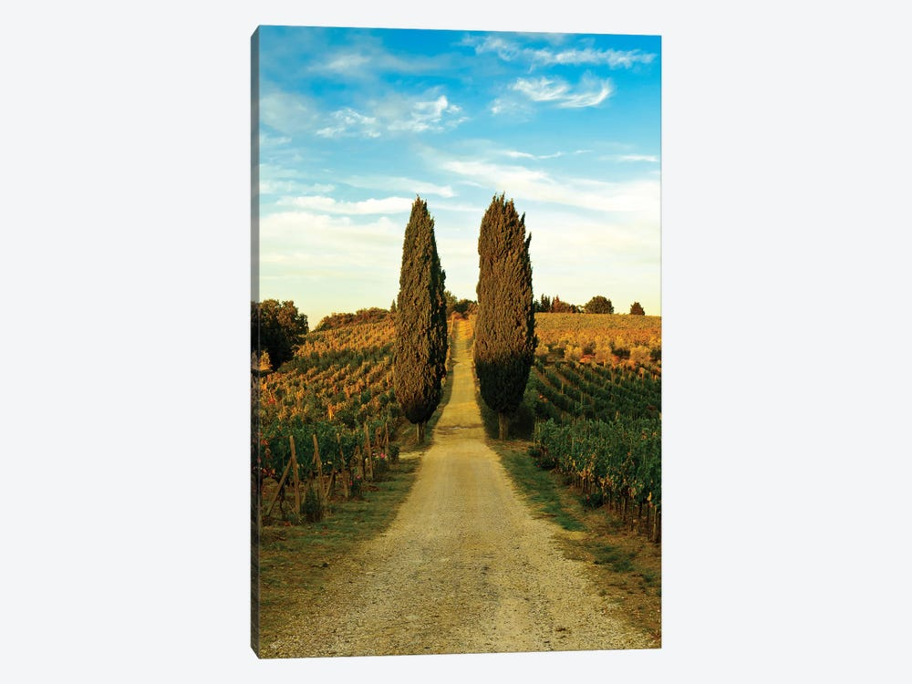 Stately Cypress Trees, Panzano In Chianti, Florence Province, Tuscany Region, Italy by Richard Duval 1-piece Canvas Print