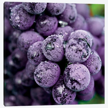 Chianti Grapes At Harvest, Greve In Chianti, Florence Province, Tuscany Region, Italy Canvas Print #RDU3} by Richard Duval Art Print