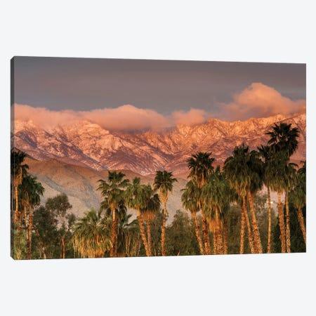 USA, California, Palm Springs. the San Jacinto and Santa Rosa mountain ranges frame the Desert Island Golf and Country Club. Canvas Print #RDU5} by Richard Duval Canvas Artwork
