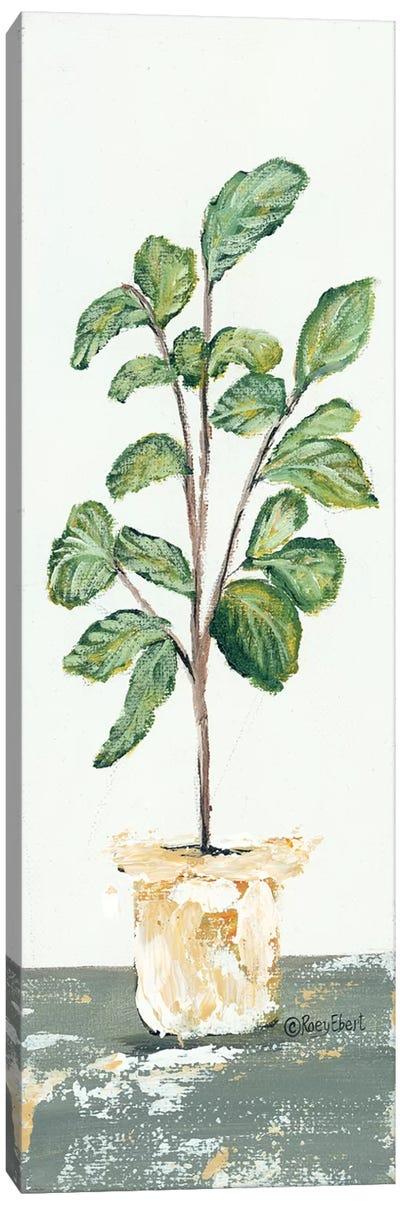 Fig Tree Canvas Art Print