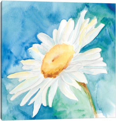 Daisy Sunshine I Canvas Art Print