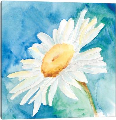 Daisy Sunshine I Canvas Art Print