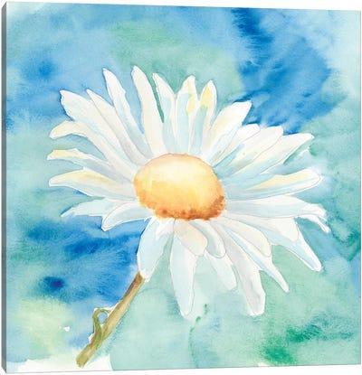 Daisy Sunshine II Canvas Art Print