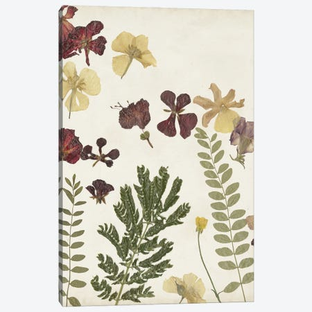 Pressed Flower Arrangement I Canvas Print #REG410} by Regina Moore Canvas Art Print