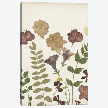 Pressed Flower Arrangement II Canvas Print #REG411} by Regina Moore Canvas Art Print