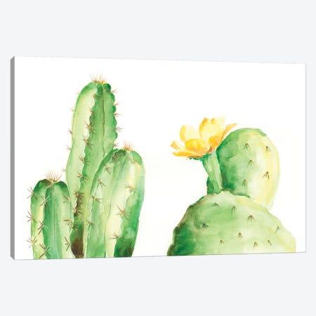 Spiny Desert Plants II Canvas Print #REG59} by Regina Moore Canvas Print