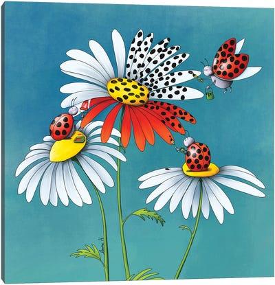 Daisies And Ladybugs II Canvas Art Print