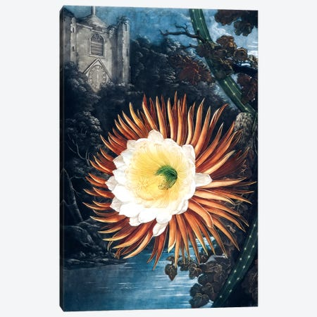 The Night-Blowing Cereus Canvas Print #REI2} by Philip Reinagle Canvas Art Print