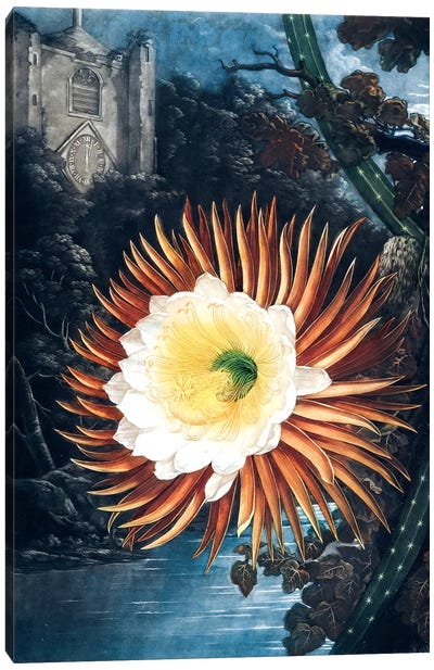 The Night-Blowing Cereus Canvas Art Print