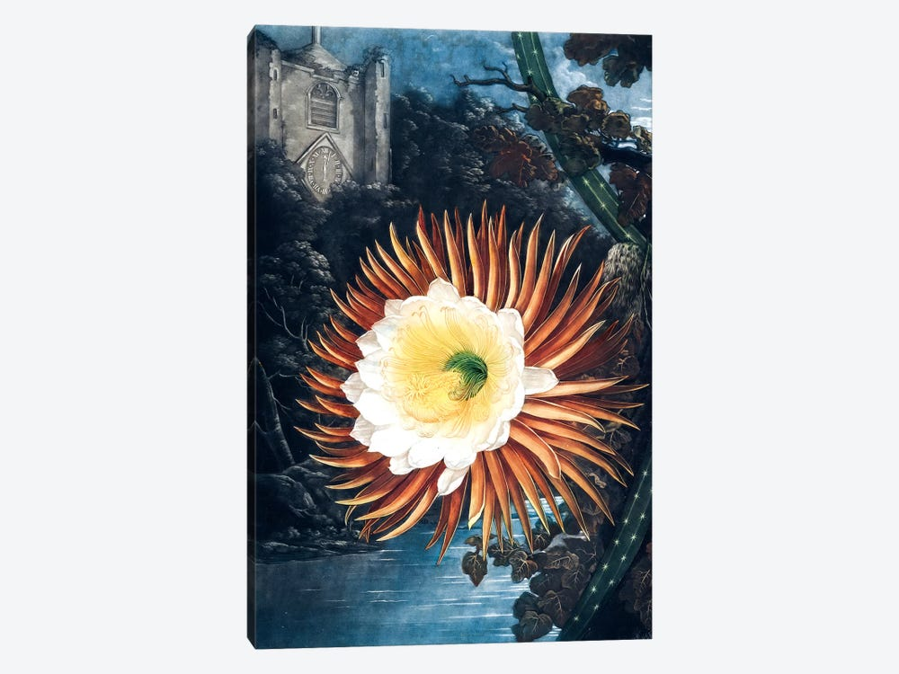 The Night-Blowing Cereus by Philip Reinagle 1-piece Canvas Artwork