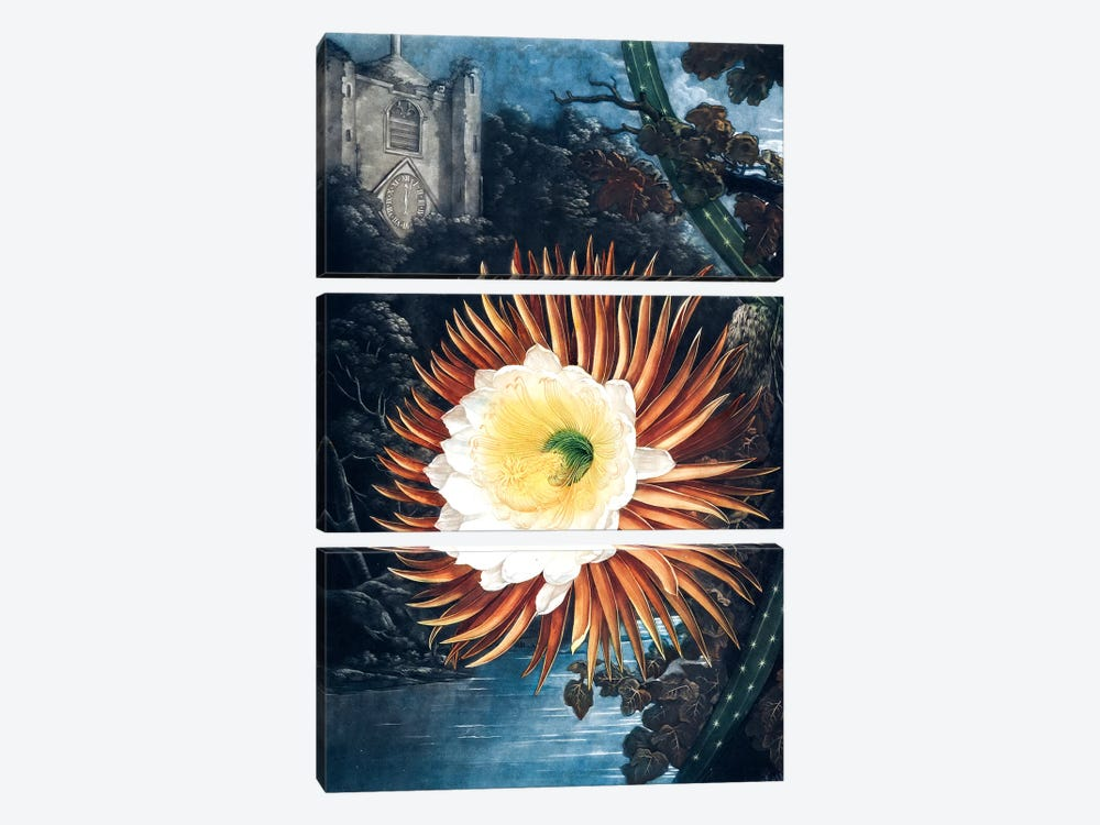 The Night-Blowing Cereus by Philip Reinagle 3-piece Canvas Art
