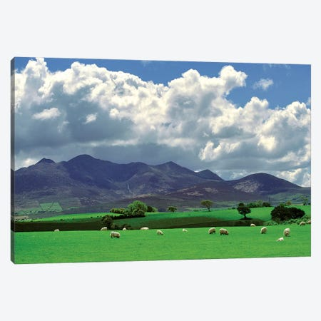 Europe, Ireland, Macgillacuddy's Reeks. Sheep Graze Happily Near Macgillacuddy's Reeks, Ring Of Kerry, Ireland. Canvas Print #RER6} by Ric Ergenbright Canvas Art
