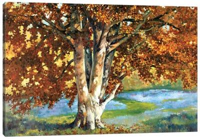 Golden Light II Canvas Print #REY2