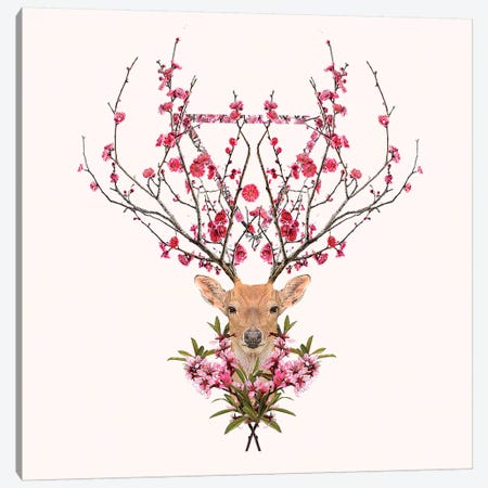Spring Deer Canvas Print #RFA40} by Robert Farkas Canvas Artwork