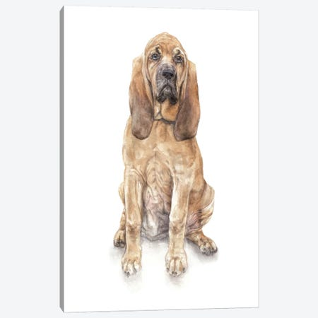Bloodhound Canvas Print #RGF100} by Wandering Laur Canvas Wall Art
