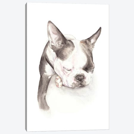 Boston Terrier Sleeping Canvas Print #RGF101} by Wandering Laur Canvas Art