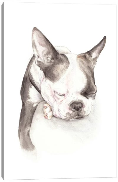 Boston Terrier Sleeping Canvas Art Print