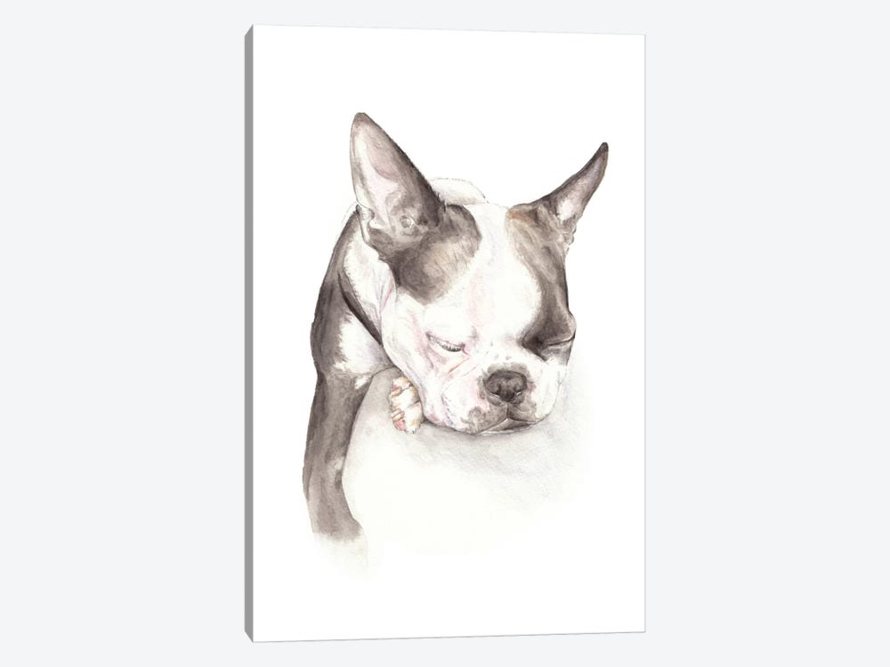 Boston Terrier Sleeping by Wandering Laur 1-piece Canvas Artwork