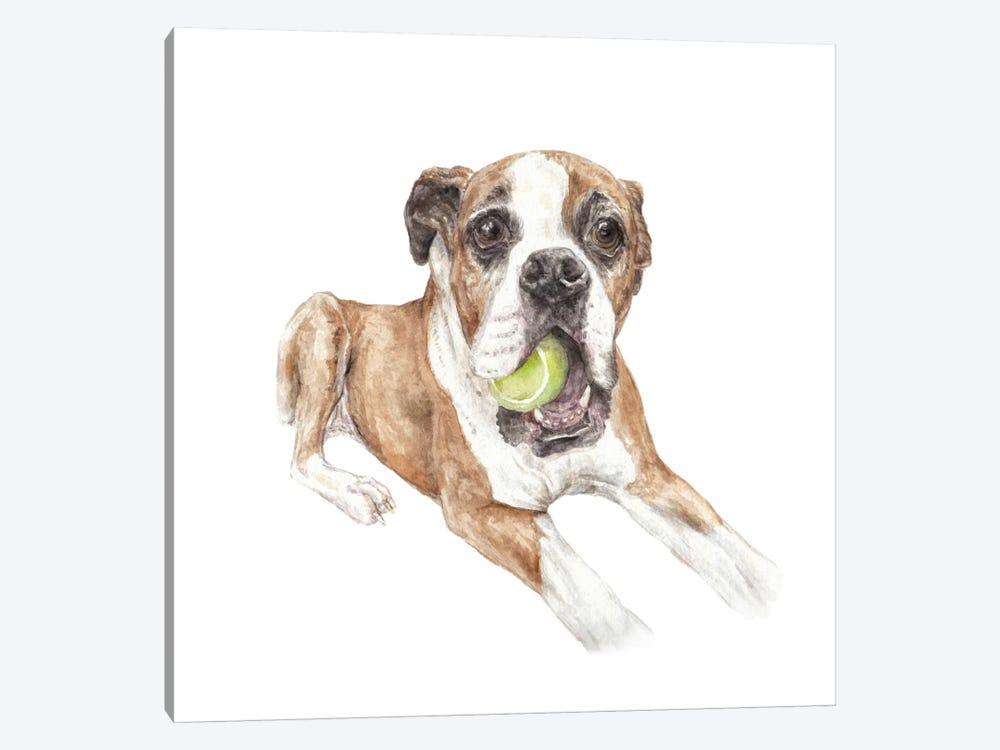 Boxer & Tennis Ball by Wandering Laur 1-piece Canvas Art Print