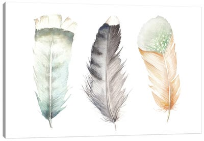 Feathers II Canvas Art Print