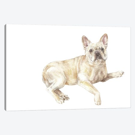 Frenchie Lying Down Canvas Print #RGF110} by Wandering Laur Art Print