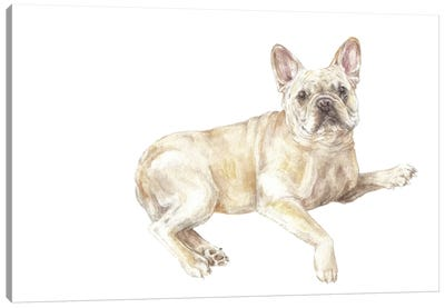 Frenchie Lying Down Canvas Art Print