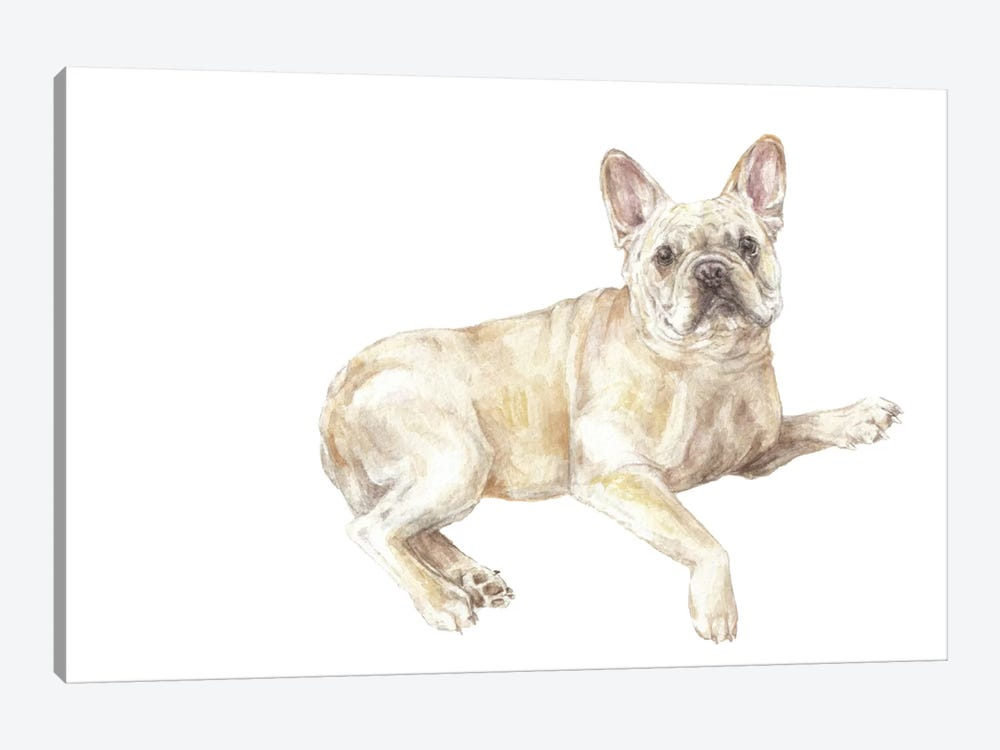 Frenchie Lying Down by Wandering Laur 1-piece Canvas Artwork