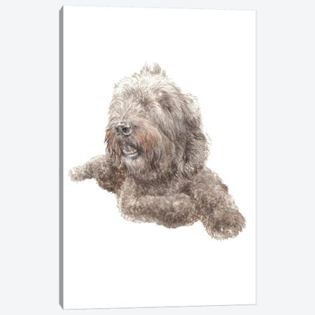 Labradoodle Canvas Print #RGF112} by Wandering Laur Canvas Art Print