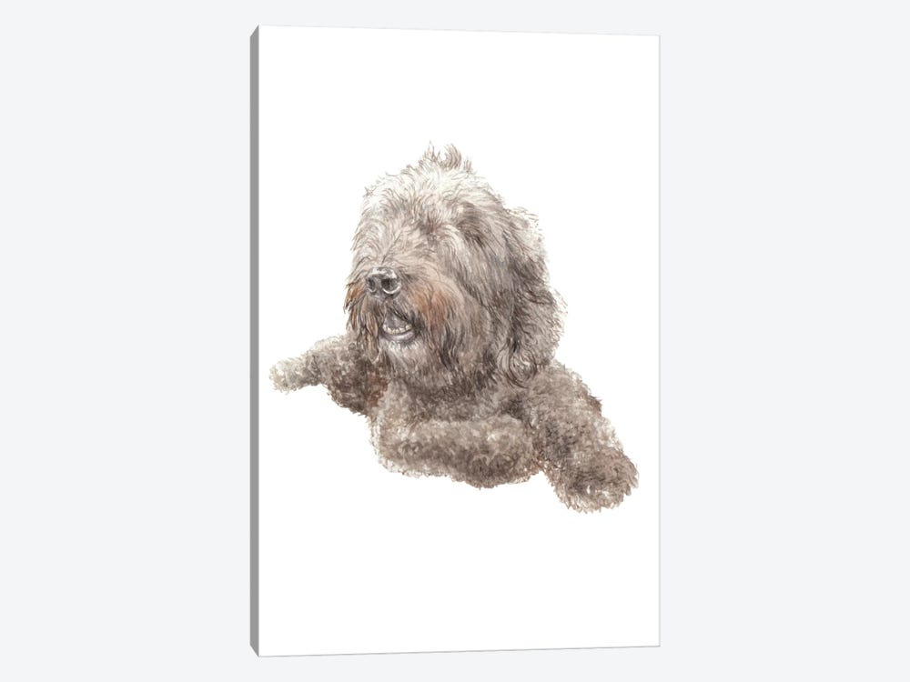 Labradoodle by Wandering Laur 1-piece Canvas Art