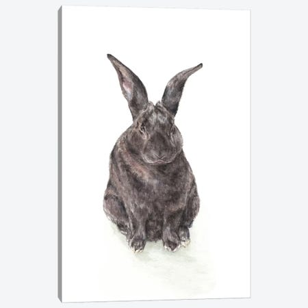 Black Rabbit Canvas Print #RGF116} by Wandering Laur Canvas Wall Art