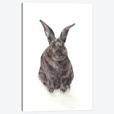 Black Rabbit Canvas Print #RGF116} by Wandering Laur Canvas Wall Art