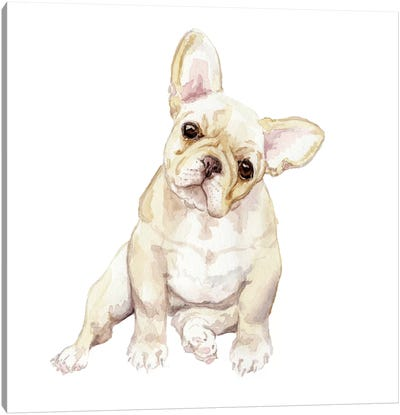 Blonde French Bulldog Canvas Art Print