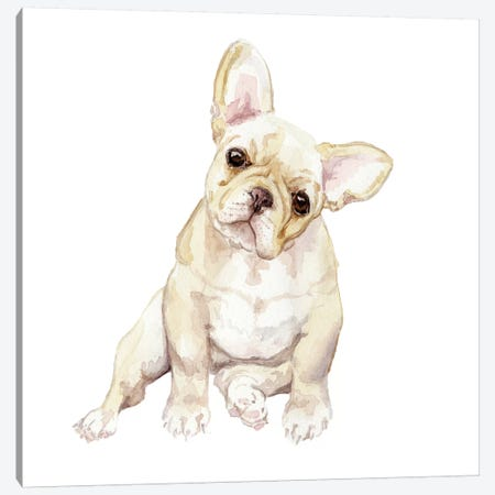 Blonde French Bulldog Canvas Print #RGF11} by Wandering Laur Canvas Art Print
