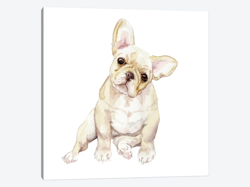 Blonde French Bulldog by Wandering Laur 1-piece Canvas Art Print