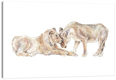Lions Canvas Art Print