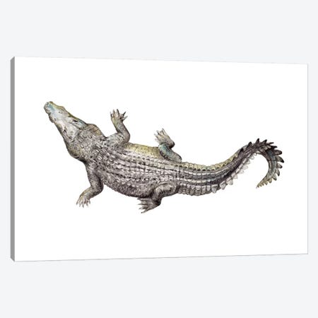 Croc Canvas Print #RGF133} by Wandering Laur Canvas Art Print