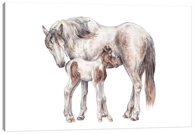 Horse And Foal Canvas Art Print
